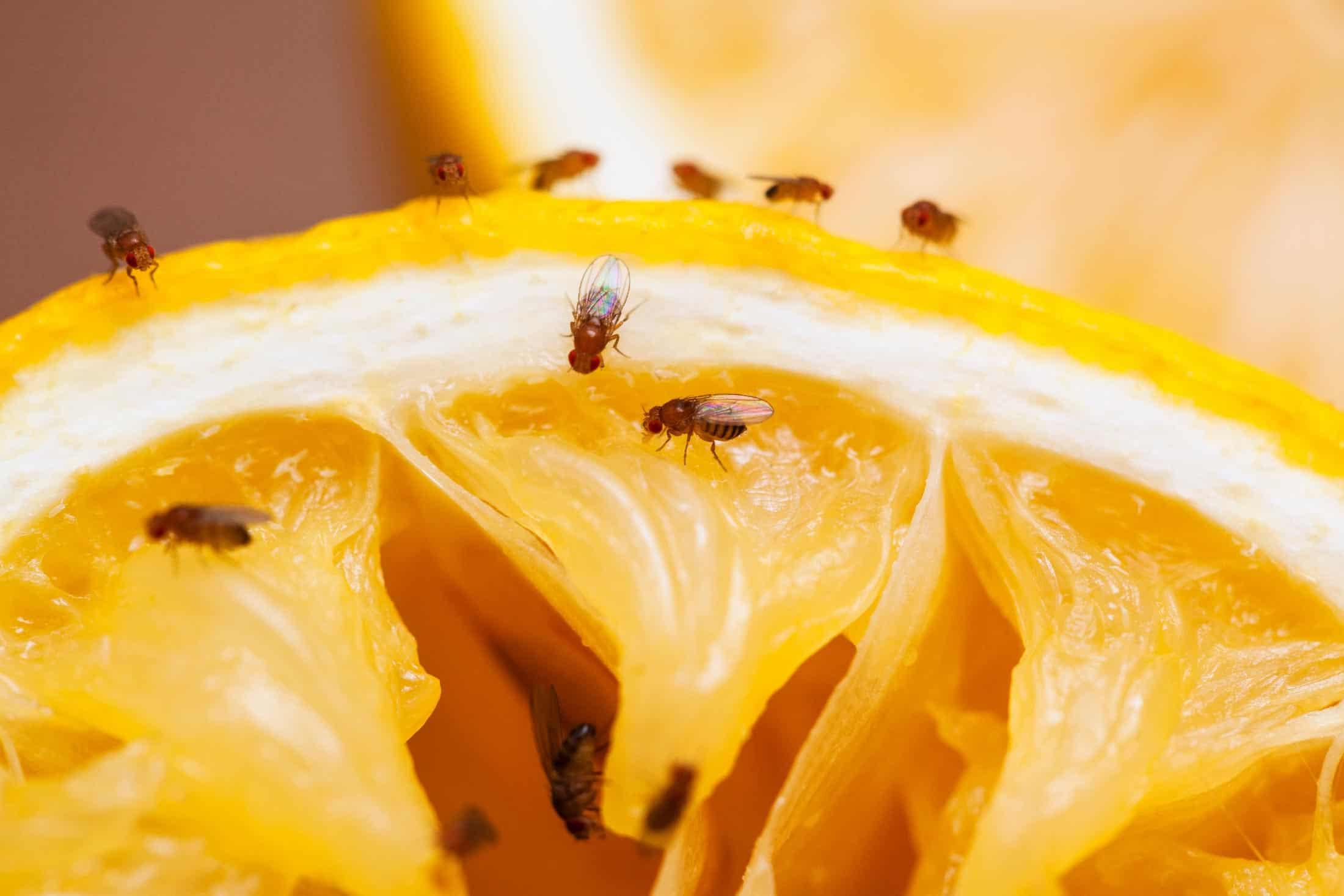 Zomer In Keuken : Bungalow met morse invloed ideaal voor zomer en winter zon